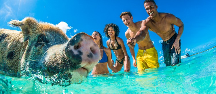 Four people trying to feed a pig in clear ocean water.