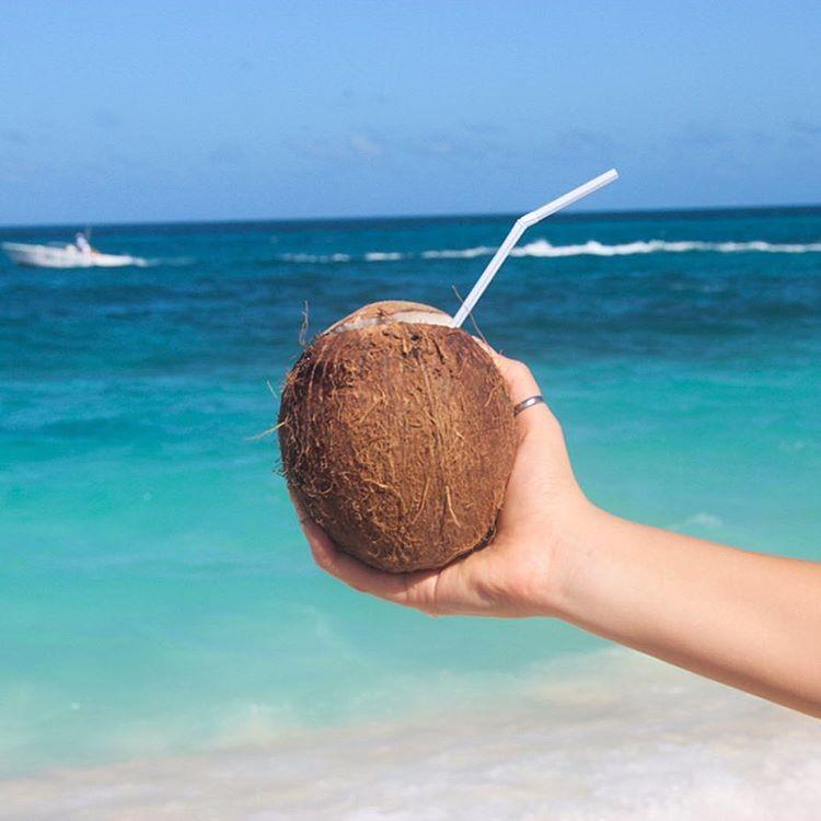 Coconut on the beach in Nassau Paradise Island