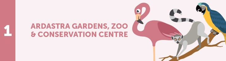 Custom Ardastra Gardens, Zoo, and Conservation Centre Header