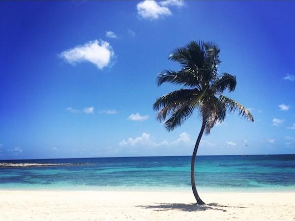 Palm tree on Cove Beach at Atlantis, Paradise Island Bahamas