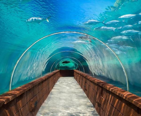 An underwater tunnel offers unique views of sharks, fish, stingrays and more at Atlantis Resort Bahamas