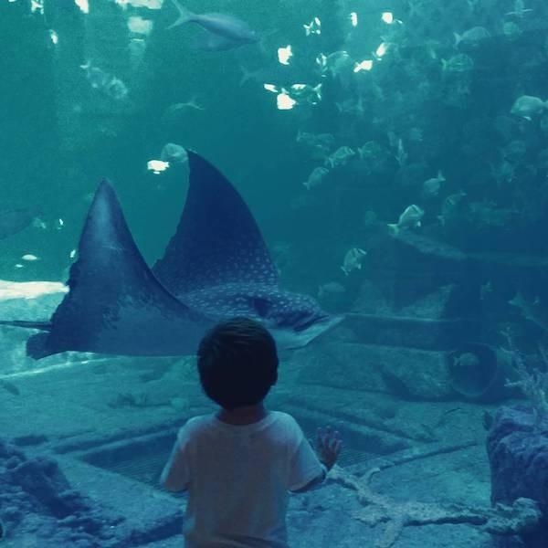 A young child marvels at the marine life at The Dig in Atlantis, Paradise Island, Bahamas.