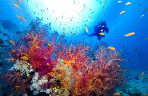 Snorkeling Nassau Paradise Island